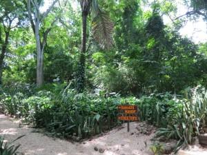 NYI Gardens